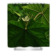 Leaf In The Middle Shower Curtain