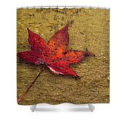 Leaf In The Rain Nature Photograph Shower Curtain
