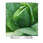 Leaf Lettuce Part 3 Shower Curtain