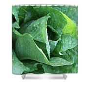Leaf Lettuce Part 4 Shower Curtain
