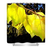 Leaf Line Shower Curtain