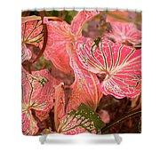 Leaf Of Color Shower Curtain