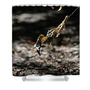 Leaf Of Fall Shower Curtain