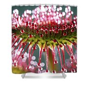 Leaf Of Sundew Shower Curtain by Nuridsany et Perennou and Photo Researchers