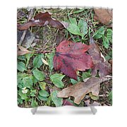 Leaf Standing Out In A Crowd Shower Curtain