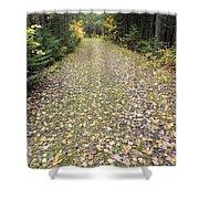 Leaf-strewn Trail Shower Curtain