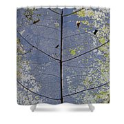 Leaf Structure Shower Curtain by Debbie Cundy