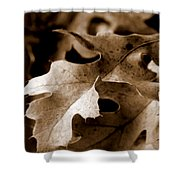 Leaf Study In Sepia IIi Shower Curtain