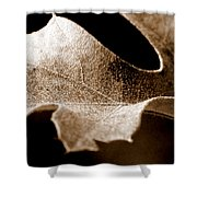 Leaf Study In Sepia Shower Curtain