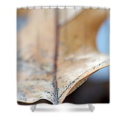 Leaf Study Vii Shower Curtain