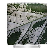 Leaf Variegated 1 Shower Curtain