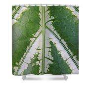 Leaf Variegated 2 Shower Curtain