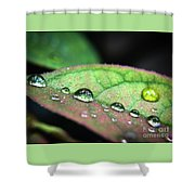 Leaf Veins And Raindrops Shower Curtain