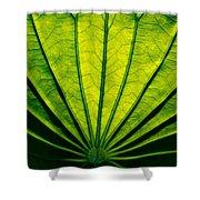 Leaf Veins Shower Curtain