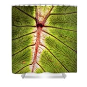 Leaf With Veins Shower Curtain