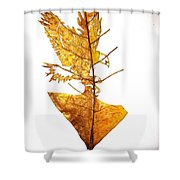 Leafcarving Shower Curtain