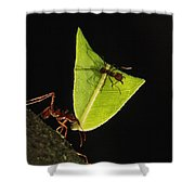 Leafcutter Ant Atta Sp Carrying Leaf Shower Curtain