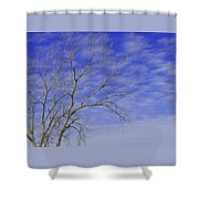 Leafless Shower Curtain