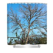 Leafless In Autumn Shower Curtain
