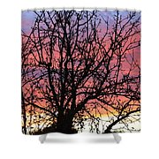 Leafless Silhouette Shower Curtain
