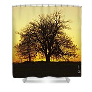 Leafless Tree Against Sunset Sky Shower Curtain