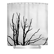 Leafless Tree Shower Curtain