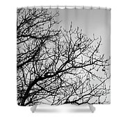 Leafless Twig Shower Curtain