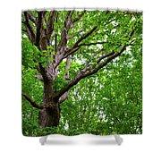 Leafy Canopy Shower Curtain