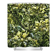 Leafy  Shower Curtain