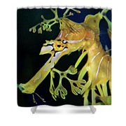 Leafy Sea Dragon Shower Curtain by Mariola Bitner