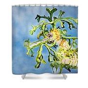 Leafy Sea Dragon Shower Curtain by Tanya L Haynes - Printscapes