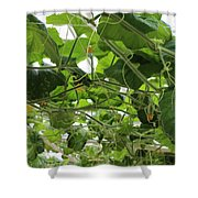 Leafy Vines Shower Curtain