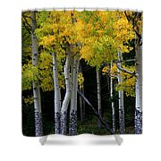 Leaning Aspen Shower Curtain