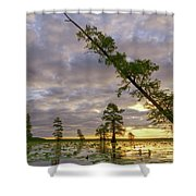 Leaning Cypress Shower Curtain