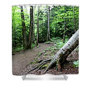 Leaning Tree Shower Curtain