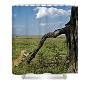 Leaping Lion Shower Curtain
