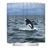 Leaping Orca Shower Curtain by Barbara Von Pagel