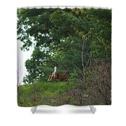 Leaping White-tail  Shower Curtain