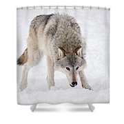 Leary Wolf Style Shower Curtain
