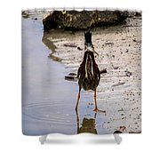 Least Bittern With A Fish Shower Curtain