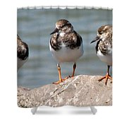 Least Sandpipers Shower Curtain