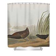 Least Water Hen Shower Curtain