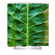 Leather Leaf Shower Curtain