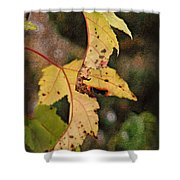 Leaves And Autumn Shower Curtain