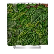 Leaves By The Way Shower Curtain