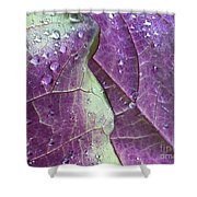 Leaves, Color,  And Dew Shower Curtain