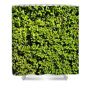 Privacy Hedge Shower Curtain