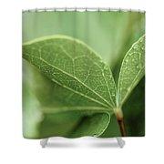 Leaves, Fresh Shower Curtain