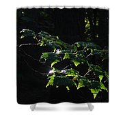 Leaves In Filtered Light  Shower Curtain