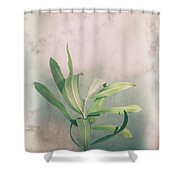 Leaves In Frame Shower Curtain